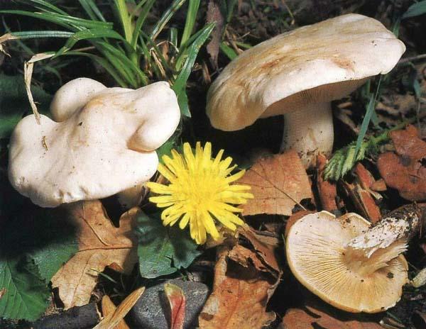 за грибами сочинение